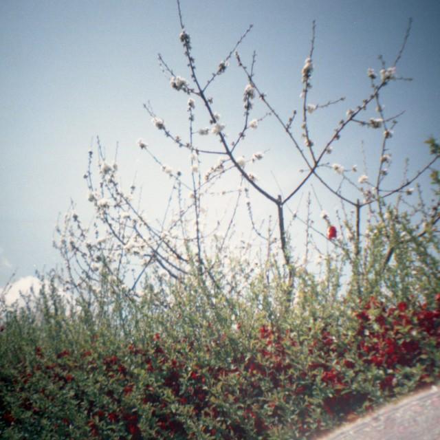 yamanashi2012spring2-6.jpg