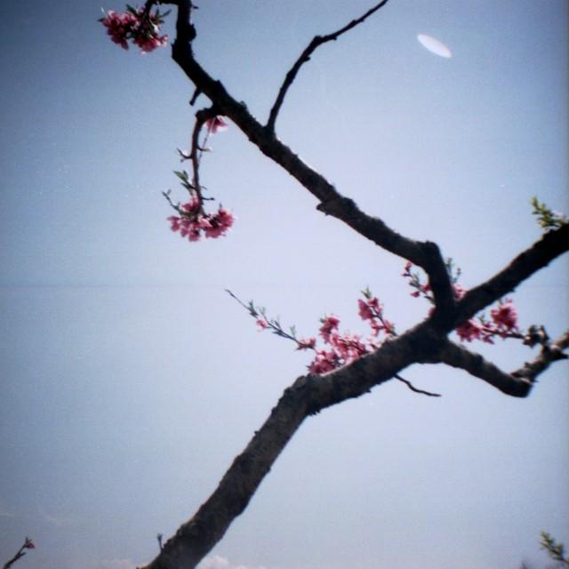 yamanashi2012spring2-7.jpg
