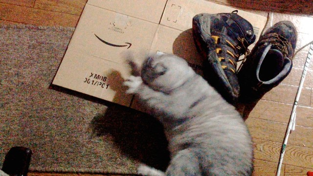 Cat Loves Hiking Shoes-3.jpg