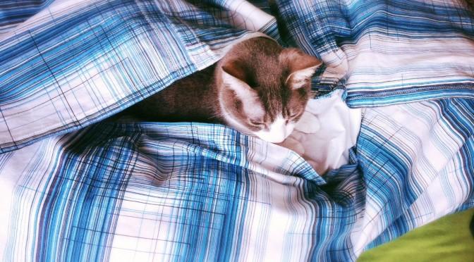 Duvet Cover for Cats-15.jpg