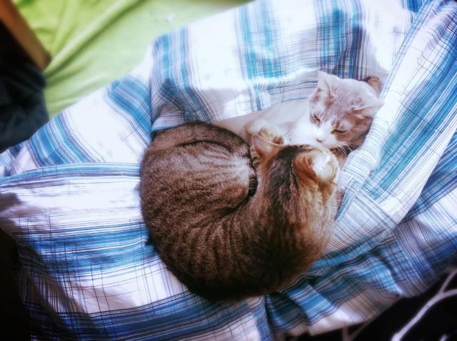 Duvet Cover for Cats-16.jpg