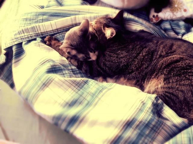 Duvet Cover for Cats-17.jpg