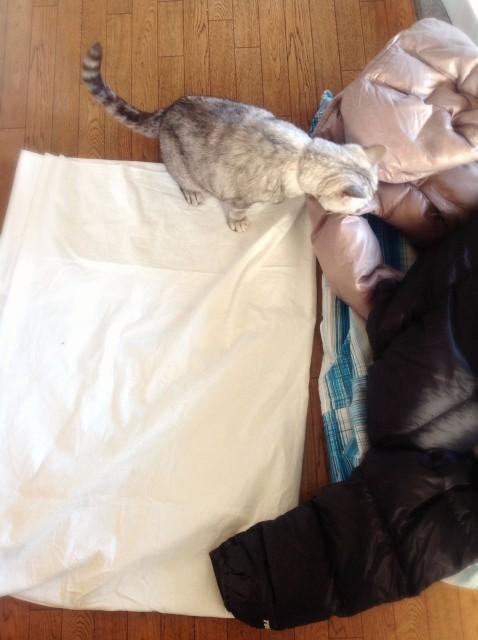 Duvet Cover for Cats-9.jpg