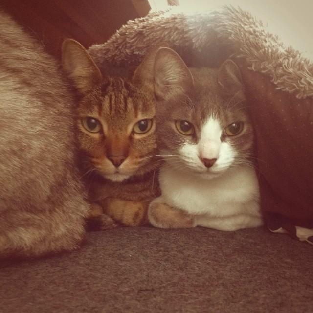 iPad 3rd_cats_20140215.jpg