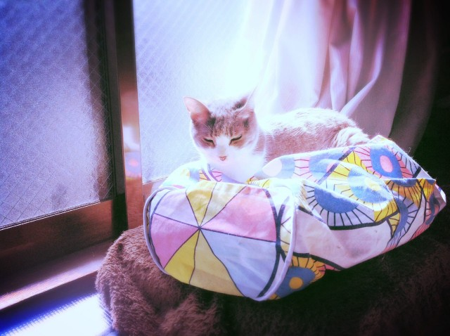 roll-boston-bag_cat-bed_2-18.jpg