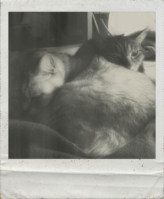 iPad 3rd_cats_20140319.jpg