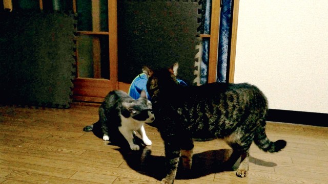 Cat Fighting-1.jpg
