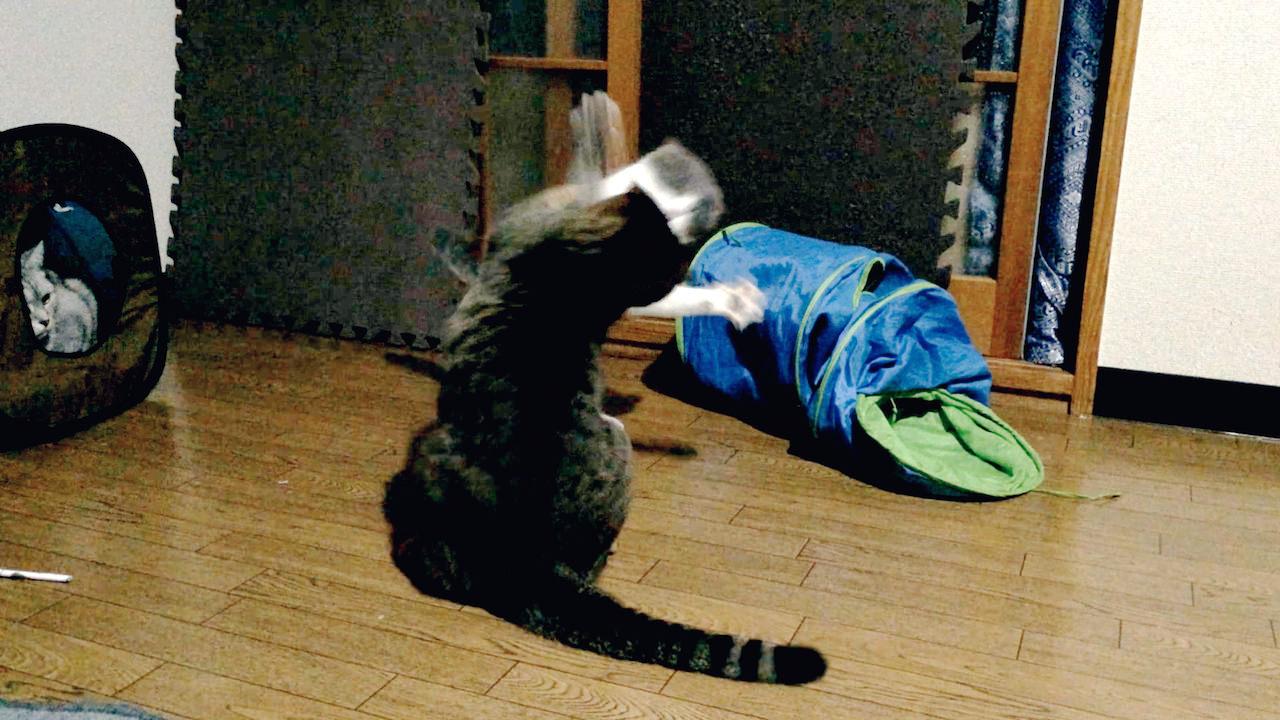 Cat Fighting-2.jpg