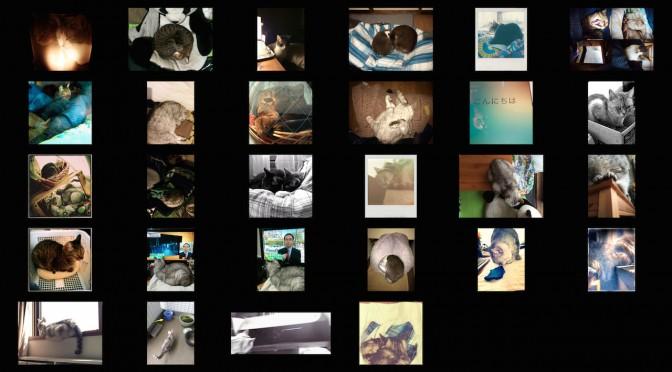 cats photos_201404.jpg