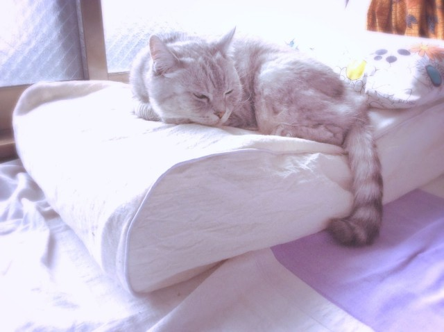 Piping Cat Bedspread-24.jpg