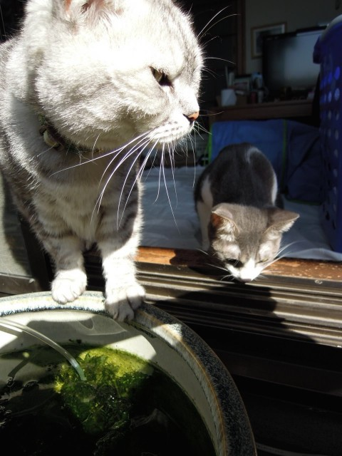 Nikon P300_Cats20140729-