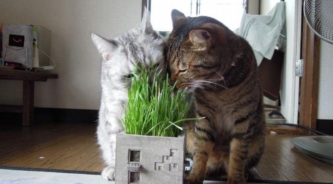 Nikon P300_Cats20140729-12.jpg