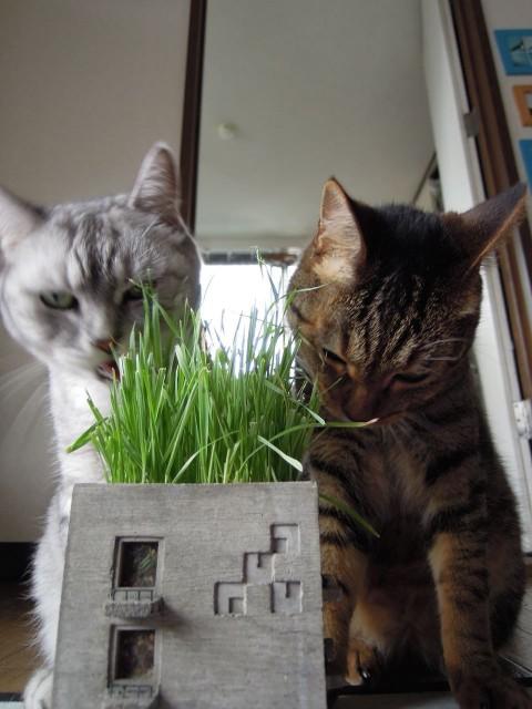 Nikon P300_Cats20140729-14,.jpg