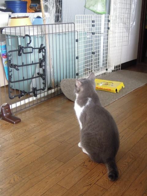 Nikon P300_cats20140710-12.jpg