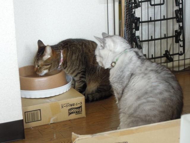 Nikon P300_cats20140710-2.jpg