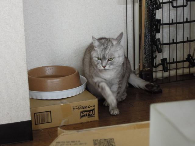 Nikon P300_cats20140710-7.jpg