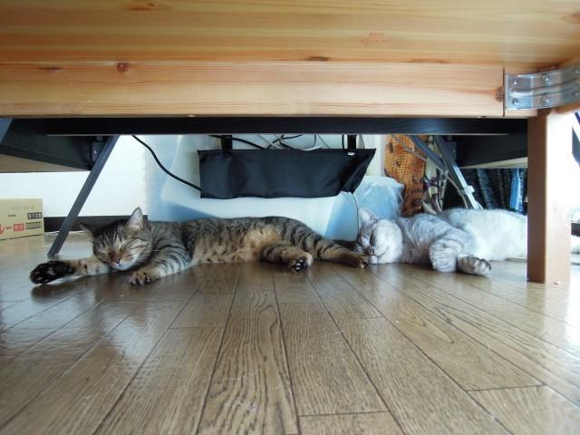 Nikon P300_cats_20140812-02.jpg