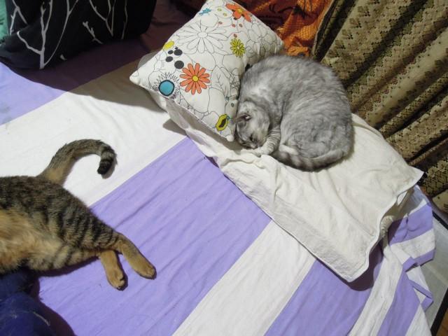 Nikon P300_cats_20140812-05.jpg