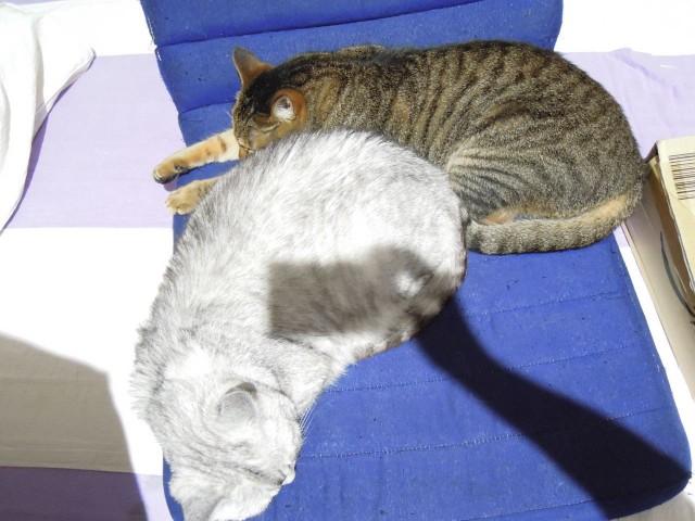 Nikon P300_cats_20140812-06.jpg