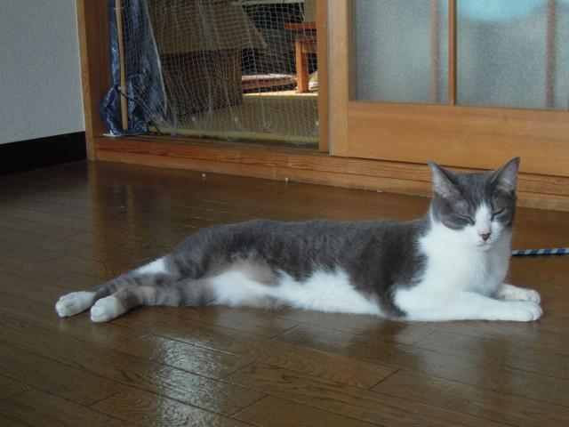 Nikon P300_cats_20140812-11.jpg