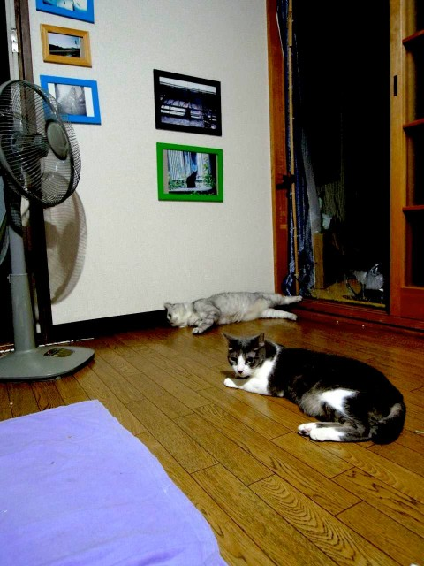 Nikon P300_cats_20140812-13.jpg