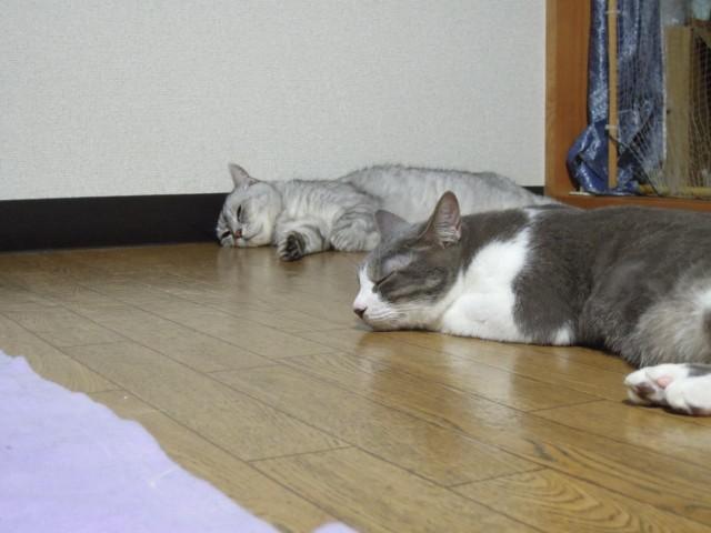 Nikon P300_cats_20140812-14.jpg