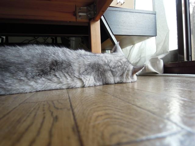Nikon P300_cats_20140812-17.jpg