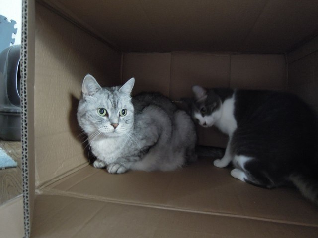 Nikon P300_Cats in Box-1.jpg