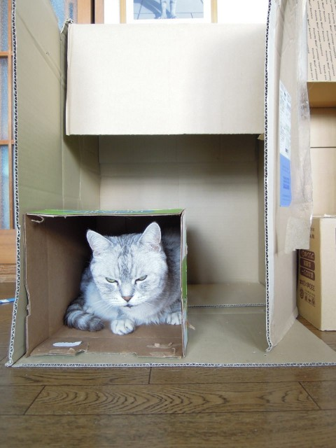 Nikon P300_Cats in Box-11.jpg