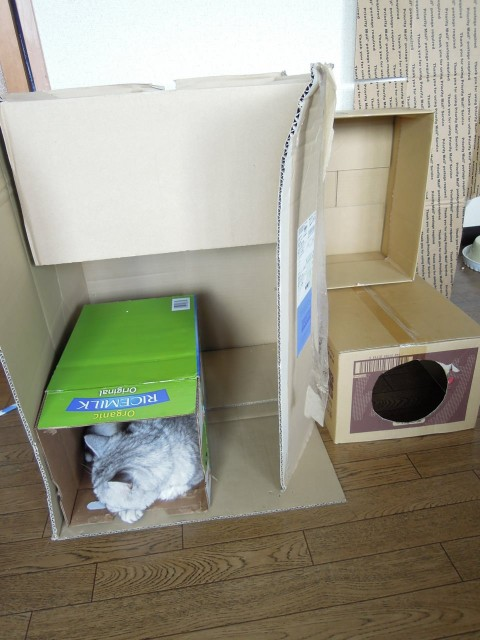 Nikon P300_Cats in Box-13.jpg
