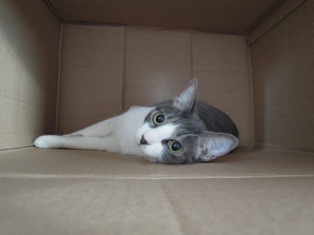 Nikon P300_Cats in Box-2.jpg