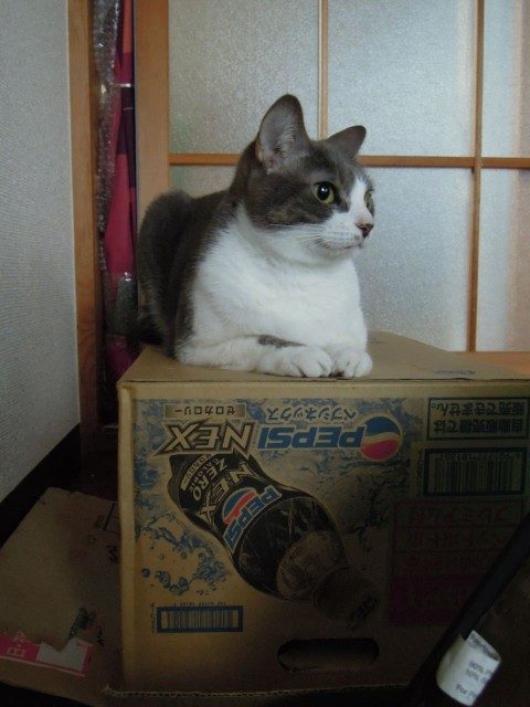 Nikon P300_Cats in Box-3.jpg
