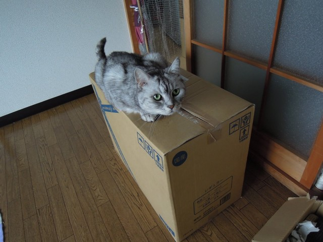 Nikon P300_Cats in Box-4.jpg