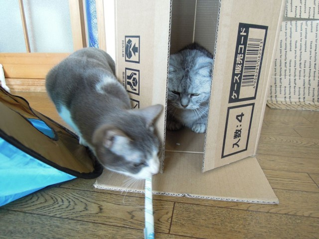 Nikon P300_Cats in Box-8.jpg
