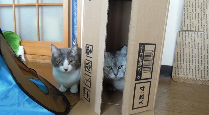 Nikon P300_Cats in Box-9.jpg