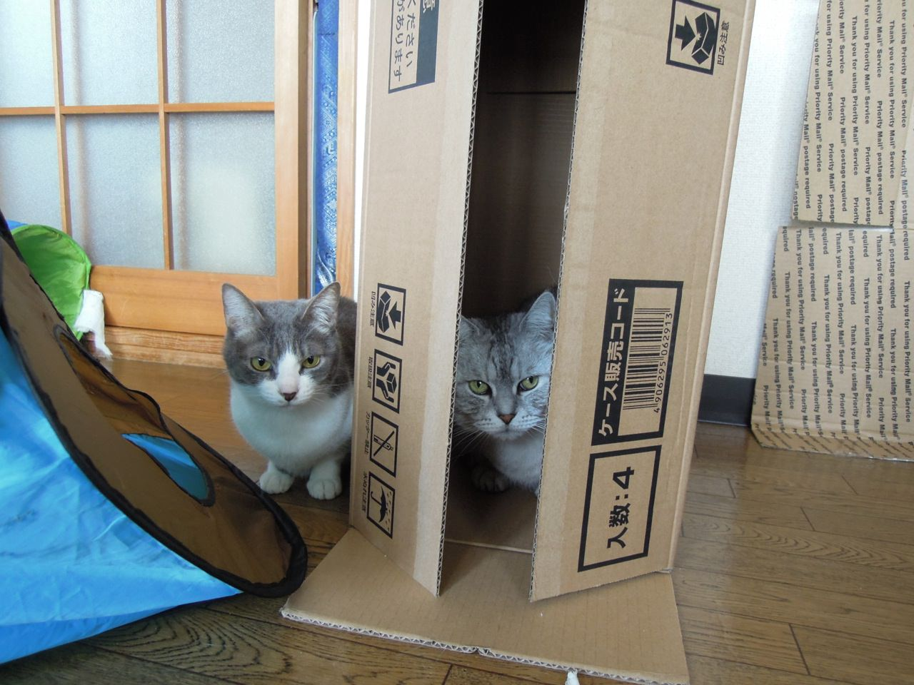 Nikon P300_Cats in Box-9.jpg