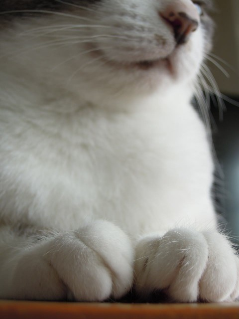 Nikon P300_Cats20140904-9.jpg