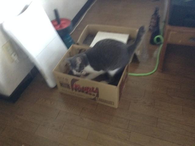 cat scratcher-1.jpg