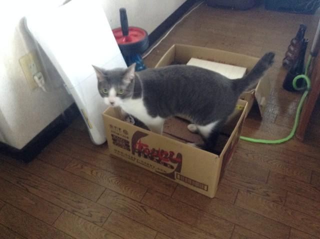 cat scratcher-2.jpg