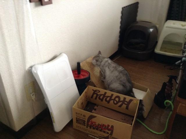 cat scratcher-3.jpg