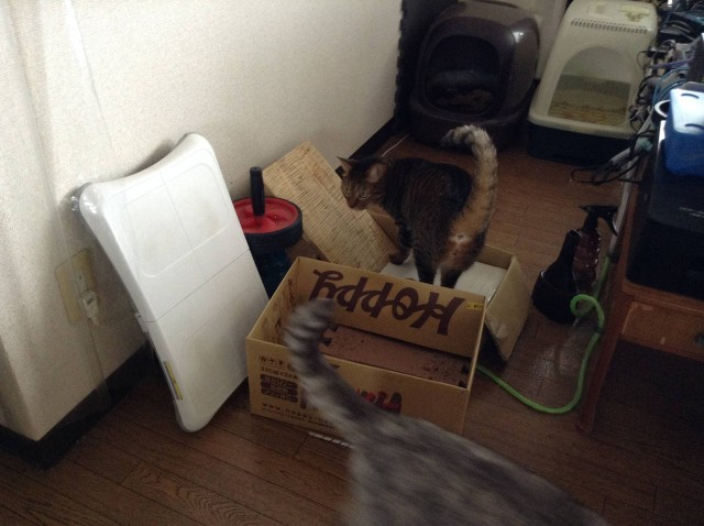 cat scratcher-5.jpg