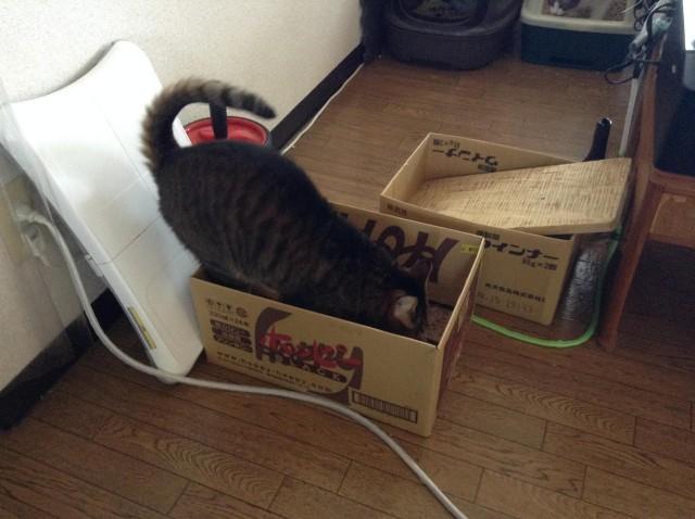cat scratcher-6.jpg