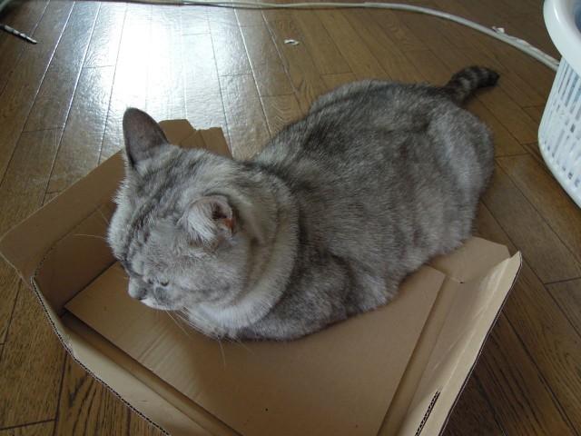 Nikon P300_Cats20141002-2.jpg