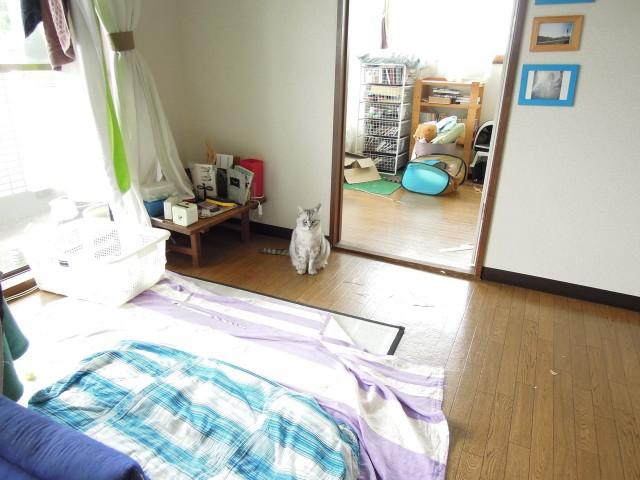 Nikon P300_Cats20141002-4.jpg