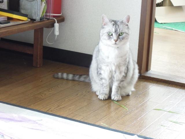 Nikon P300_Cats20141002-5.jpg