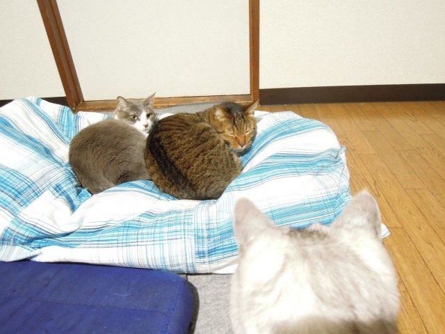 Nikon P300_Cats20141002-6.jpg