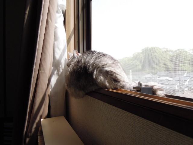 Nikon P300_Cats20141002-9.jpg