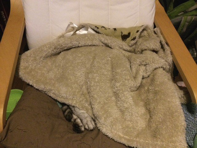 20141221catbed_1