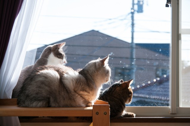20150216cats-1
