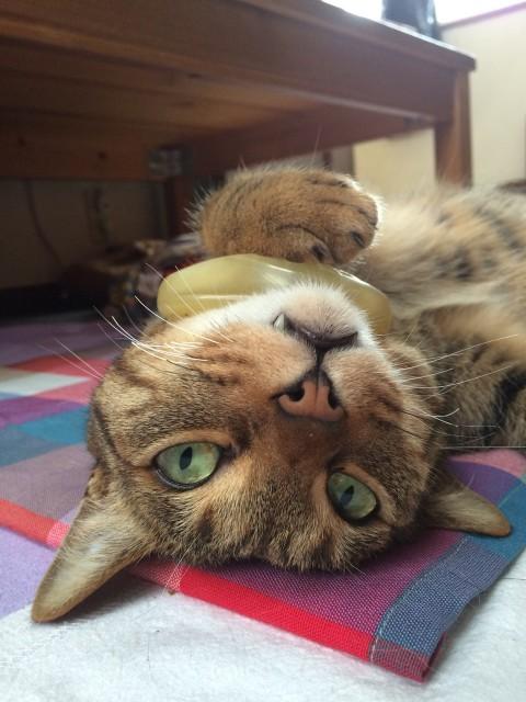20150601cats - 8